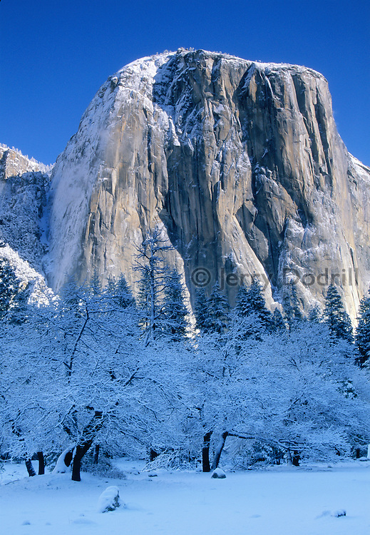 El Capitan in morning light after a winter storm. Yosemite Valley, California