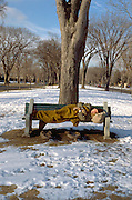 50 yr old homeless man sleeping on park bench.  St Paul Minnesota USA