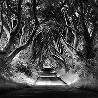 The Dark Hedges is the name given by the locals to this Beech tree lined avenue named Bregagh Road near the village of Armoy in Co Antrim.
