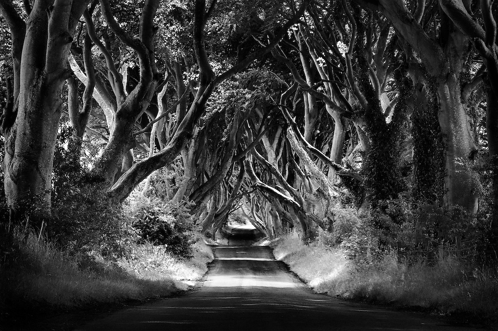 The Dark Hedges is the name given by the locals to this Beech tree lined avenue named Bregagh Road near the village of Armoy in Co Antrim.<br /> It's not the camera, it's the photographer that makes the image. Here we have the now famous tree lined road in history thanks to the television show &quot;Game of Throws&quot;. What I can remember, this image was taken just as there had started to film in Northern Ireland. The plan was to stop here on the way home after a few days shooting along the Antrim coast. We had a fine misty rain all morning and this continued as I captured this images. Didn't realy matter as the camera was under the cover of the trees. This was taken with my pocket camera at the time, a Canon G10, using my fully loaded Canon EOS 5D MkII as a support. Yes I rested the G10 on top of the 5D which was on the tripod in the middle of the road. I have a 36 inch print framed  hanging in the front room of my house and it looks stunning even if I do say so my self.