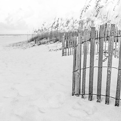 Wooden beach fence and beach grass black and white photo. Pensacola Beach Florida is a coastal city in the Emerald Coast area of the Southeastern United States. Photo is vertical and high resolution. Copyright ⓒ 2018 Paul Velgos with All Rights Reserved.