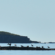 EAGLE ISLAND, Maine -- June 23, 2014 --<br /> Eagle Island.  Steve Ingram. lead volunteer with Friends of Eagle island. Unsung Hero. The Forecaster. <br /> Photo © Roger S. Duncan 2014.