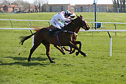 AYE RIGHT (2) ridden by Callum Bewley and trained by Harriet Graham winning The Seko Logistics Scotland Novices Handicap Hurdle Race over 3m (£16,800) ring the Scottish Grand National, Ladies day at Ayr Racecourse, Ayr, Scotland on 12 April 2019.