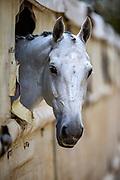 Paardenhoofd<br /> CDI Exloo 2019<br /> © DigiShots