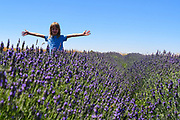 Young girl has fun in a lavender field Photographed in Golan Heights, Israel