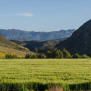 Agricultural fields. Santa Rosa Valley, CA. USA.