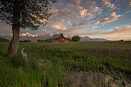 The T.A. Moulton barn, was built in 1913 to shelter horses owned by the Moulton family. More than 100 years later, this barn has become an iconic landmark, synonymous with Grand Teton National Park and photographed by thousands of visitors each year.