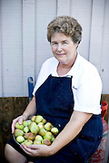 Ruth Toth picks pear figs to be cooked down into preserves. Toth uses the preserves in her restaurant, Cafe Atlantic.