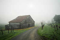 Dry Creek Valley Barn Winter Morning, Sonoma County, California<br /> <br /> Year Photographed: 2018