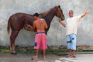 Men washing a horse that is cut from being hit by a train in Cardenas, Matanzas Province, Cuba.