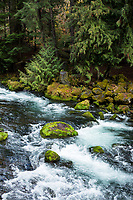 North Umpqua River. Cascade Mountains, Oregon.