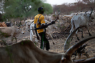 A Nuer boy guards his father's cattle outside of Bentiu in Unity state. Cattle raids between the two largest tribes, the Dinka and the Nuer have caused hundreds of deaths in the last year. In some raids thousands of cattle are siezed.