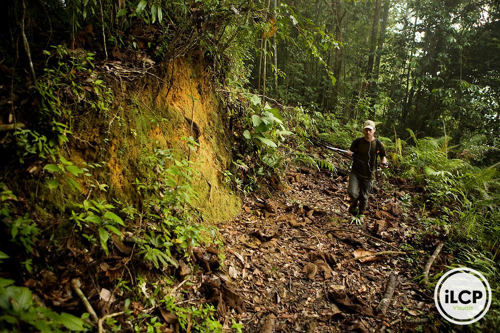 Bornean Clouded Leopard (Neofelis diardi borneensis) researcher Andrew Hearn radio tracking in secondary lowland rainforest, Kinabatangan River, Sabah, Borneo, Malaysia