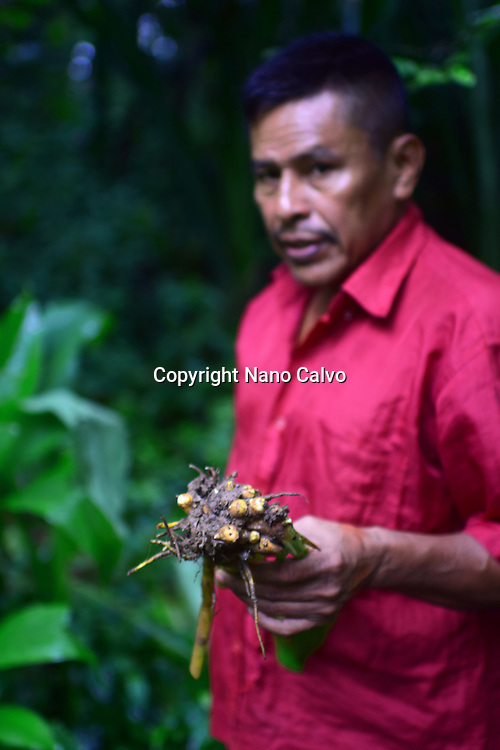 Catato López, Bribri man showing root used for assorted purposes. A day with the Bribri, indigenous people in Limón Province of Costa Rica