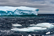 Bird photography and Icebergs NL Canada