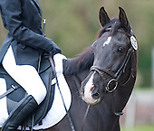 Mar 29 2015 Southlands Dressage % day