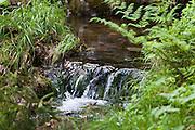 Bach, Rinnsal, Großer Arbersee, Bergsee, Bayerischer Wald, Bayern, Deutschland | creek, mountain lake Grosser Arbersee, Bavarian Forest, Bavaria, Germany