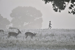 © Licensed to London News Pictures. 28/10/2019. London, UK. A frost and mist covered landscape on a bright winter morning in Richmond Park, London. The UK is due to see brighter weather over the next few days, following days of heavy rain which caused flooding in parts. Photo credit: Ben Cawthra/LNP