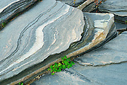 Detail of Precambrian Shield rock <br /> Killbear Provincial Park<br /> Ontario<br /> Canada