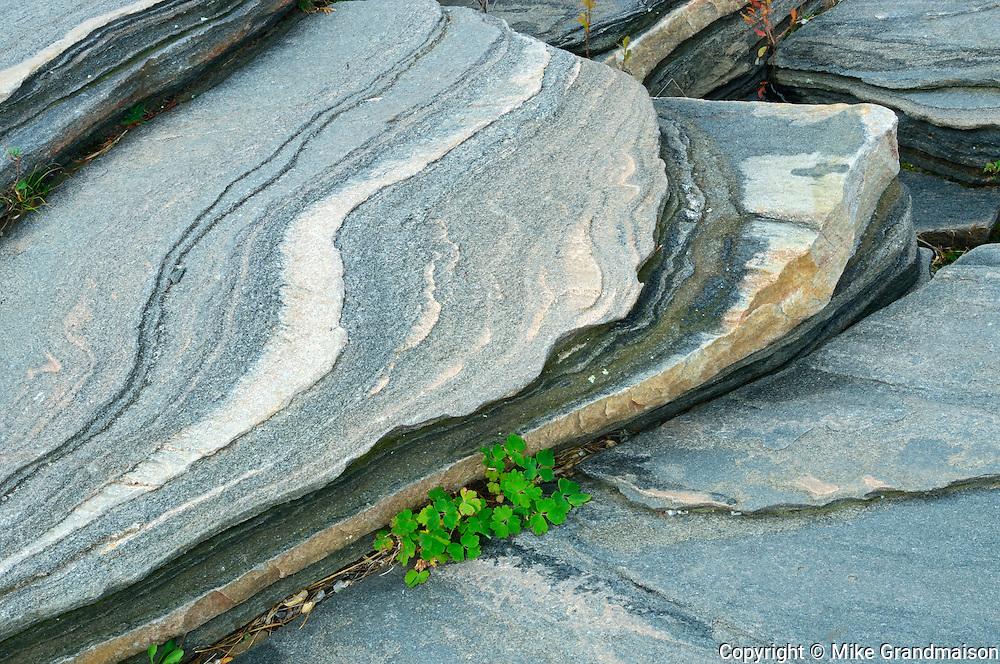 Detail of Precambrian Shield rock <br /> Killbear Provincial Park<br /> Ontario<br /> Canada