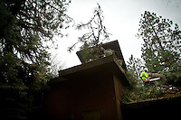 A Grace Tree Service workers trims branches off a fallen pine tree before having it lifted from the roof of a home that was damaged when the 120-foot tree fell during a wind storm Thursday, April 8, 2010 in Coeur d'Alene, Idaho.