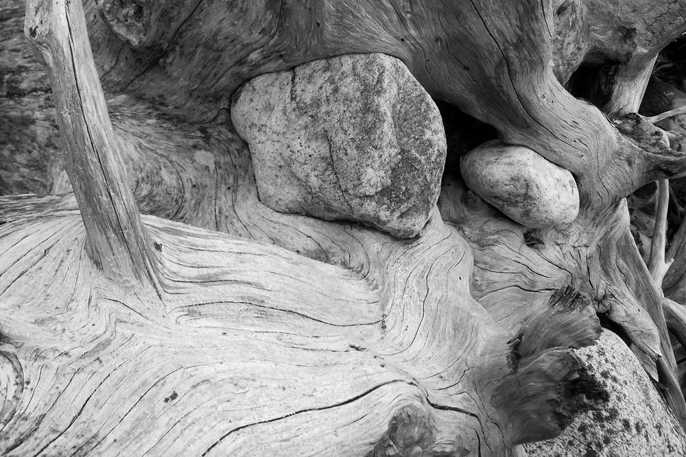 USA, Alaska, Juneau, Detail of bleached log on beach along Stephens Passage