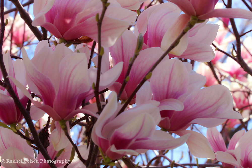 &quot;Chaotic Peace&quot;<br /> <br /> Flowers by Rachel Cohen