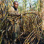 Concern Universal - Building Capacity in Sugar