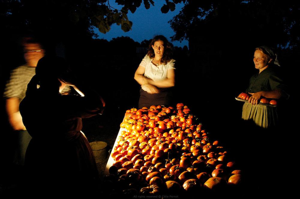 Vente de tomates &agrave; la ferme. Les Petersheim, install&eacute;s comt&eacute; de Clark depuis quatre g&eacute;n&eacute;rations, ont onze enfants de 5 &agrave; 23 ans. Pendant l'&eacute;t&eacute;, alors qu'il n'y a pas &eacute;cole, tous prennent part aux activit&eacute;s quotidiennes de la ferme et des r&eacute;coltes. Sur leur exploitation de 162 hectares, la taille moyenne d'une ferme Amish, ils cultivent de l'avoine, du bl&eacute;, du ma&iuml;s, du soja, du sorgo et du millet en suivant des techniques &eacute;cologiques traditionnelles. Ils ont &eacute;galement 40 chevaux, 25 vaches et un petit &eacute;levage de poules et cochons.<br /> <br /> Tomatoes evening sale. The Petersheim, established in Clark county since four generations, have eleven children from 5 to 23 years old. During the summer, whereas the school is closed, all take part in the daily activities of the farm and with harvests. On their exploitation of 162 hectares, average size of an Amish farm, they cultivate oat, wheat, corn, soy beens, sorgo and millet following ecological techniques. They also have 40 horses, 25 cows and a small breeding of hen and pigs.