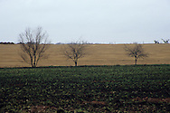 Texas Field in Winter with 3 Trees