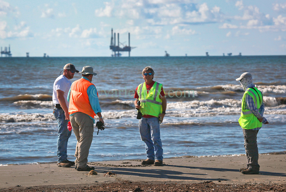12th October, 2013. Wisner Beach, Port Fourchon, Louisiana.<br /> Contractors working for the BP Onshore Safety Task force survey the beach before sending out a clean up crew. Following recent storms in the Gulf of Mexico, tar balls, oil particles and and vast oil mats from the BP Deepwater Horizon Macondo Well continue to wash ashore in abundance. 3 1/2 years since the worst oil spill in history and on the eve of a potentially historic penalties which could be as high as $18 billion being levied against British Petroleum by the Federal Government, it is clear that BP's problems will not go away any time soon.