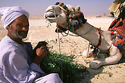 Rider feeding his camel