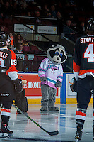 KELOWNA, CANADA - JANUARY 23: Rocky Racoon, the mascot of the Kelowna Rockets, stands on the ice at the start of the game against the Medicine Hat Tigers on January 23, 2016 at Prospera Place in Kelowna, British Columbia, Canada.  (Photo by Marissa Baecker/Shoot the Breeze)  *** Local Caption *** Rocky Racoon;