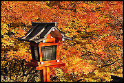 Japanese temple light and autumn maples
