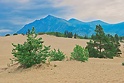 Carcross Desert - affectionately known as the World's Smallest Desert. The Coast Mountains.<br />Carcross<br />Yukon<br />Canada