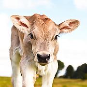 20110923 Dairy Bob