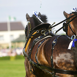 Great Yorkshire Show 2014 Pairs Turnouts