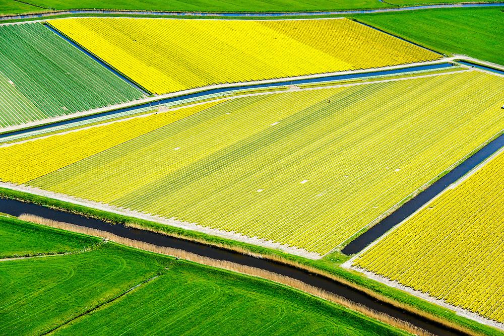 Nederland, Noord-Holland, Bergen, 20-04-2015;<br /> begin van de bloei van bloembollenveld in het voorjaar, omgeving Egmond aan den Hoef, historisch gebied voor de teelt van bollen op geestgrond.<br /> Beginning of flowering bulbs field in spring.<br /> luchtfoto (toeslag op standard tarieven);<br /> aerial photo (additional fee required);<br /> copyright foto/photo Siebe Swart