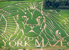 2019_07_12_York_Maze_Lion_AMC