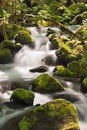 Tranquil - Columbia River Gorge National Scenic Area