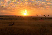 Savannah sunrise with hot-air balloons.  Maasai Mara, Kenya.