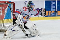 Michal Fikrt (HK Acroni Jesenice, #37), goalie, during ice-hockey match between HDD Tilia Olimpija and HK Acroni Jesenice in 41st Round of EBEL league, on Januar 23, 2011 at Hala Tivoli, Ljubljana, Slovenia. (Photo By Matic Klansek Velej / Sportida.com)