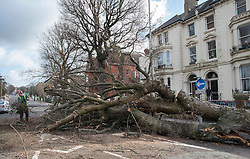© Licensed to London News Pictures. 28/03/2016. Brighton, UK. A worker clears a fallen tree as storm Katie hits the south coast. Photo credit: Peter Macdiarmid/LNP