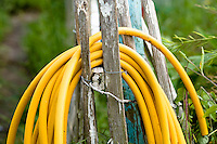 a coiled yellow hosepipe