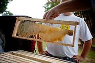 aycock treasure tree honey hive