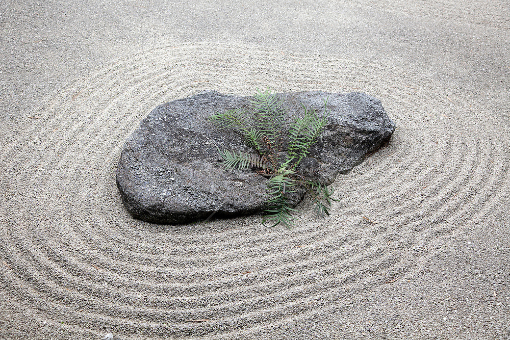 zen garden rock, gravel and fern on display