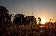 UNITED KINGDOM, London: 04 August 2015 A cyclist rides through Richmond Park in the early morning sun this morning. Rick Findler / Story Picture Agency