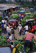 COLOMBIA: Pereira.Platanos (sour bananas) are sold at a wholesale market improvised by their farmers in jeeps.