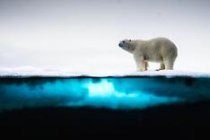 Svalbard #39 2018