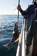 En h&auml;lleflundra p&aring; kroken.  Sage Klauder arbetar p&aring; kapten Nik Ranta b&aring;t. Han hj&auml;lper till att ta upp fisken.<br /> Seward, Alaska<br /> <br /> Photographer: Christina Sjogren<br /> <br /> Copyright 2018, All Rights Reserved